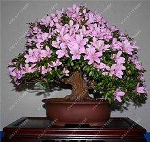 Go Garden 20Pcs / bag Rare Azalea Seeds