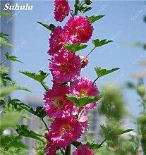 Go Garden 300 PC/bag Doppel Flap Mve Flower thaea