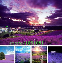 Go Garden 500 Stück Lavendel Samen Kraut Samen
