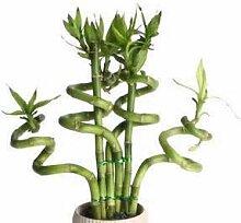 Go Garden Glücklicher Bambus Topf Balkon