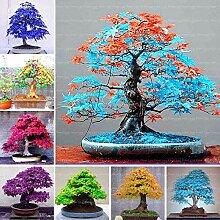 Go Garden Lila: 30Pcs Rare Blau