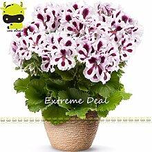 Go Garden Lila Streifen weiß große Blume