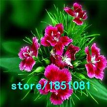 Go Garden Pack 100 Stück schwarz Samen Bkon