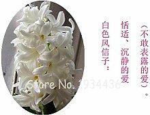 Go Garden Thailand Sonderbare Bonsai hydroponn