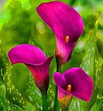 Go Garden Zeit-Limit !! Blumengarten 10 Stück