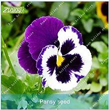 Go Garden ZLKING 100pcs Pansy n Bonsai Pflanzen