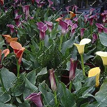 Go Garden ZLKING 2 Stück Verschiedene Farben