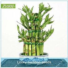 Go Garden ZLKING 20pcs Glücklicher Bambus Topf