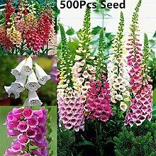 good01 500 Stücke Blumensamen, Fingerhut Purpurea