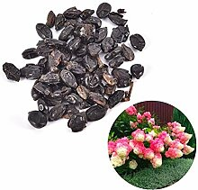 good01 50Pcs Hydrangea-Blumensamen Für Das