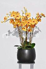 Gorgeous Fresh Touch Pfirsich Orchidee Pflanze Blumen-Arrangement mit Blattwerk