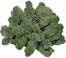 GR 500Moschus nordisch Sack Pflanze Natur bunt