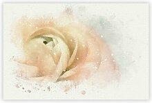 Grafikdruck Pink Ranunculus Flower Big Box Art