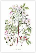 Grafikdruck Pink Smooth Rose Flower Illustration
