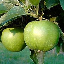 Granny Smith Compact, Apfel für warme Lagen