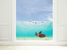 GRAZDesign 220009_110x57_GB_GS Sichtschutzfolie Bad | Fenster- Dusch-Folie/Farbig Schildkröte im Wasser | Glasdekor für Privatsphäre (110x57cm//Glasdekor Set)