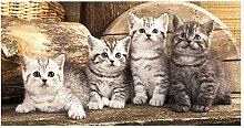 GRAZDesign Sichtschutzfolie Kinderzimmer Katzen  
