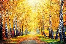 GREAT ART Fototapete Goldener Herbst Birken Allee
