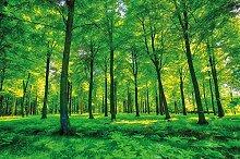 GREAT ART Fototapete grüner Wald 336 x 238 cm -