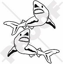 GREAT WHITE SHARK, GROSSER WEISSER HAI Kiefer