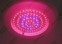 Green Lamp 90W LED UFO Wachstums licht brett