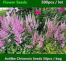Green Seeds Co. ^^ Neuartige Pflanze Astilbe