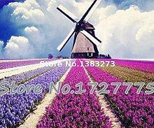 Green Seeds Co. 100 stücke Englisch Lavendel