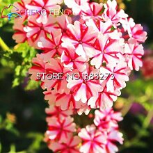 Green Seeds Co. 30 Partikel Peitschengras Bonsai