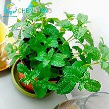 Green Seeds Co. 400 Stück Pfefferminz Minze