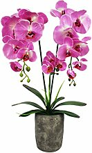 GreenBrokers Zuchtset 98F300r-212# Orchidee in runder Zement Topf, Pink