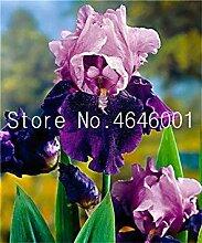 . Große Förderung! 100 Stück Iris Pflanze,