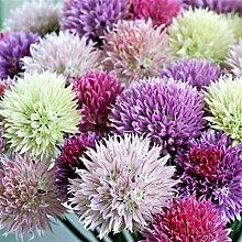 Große helle Mischfarben Allium-Zwiebeln im Freien