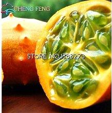 Großer Verkauf 20 PC / Los Japan Gurken-Samen Innenhof Terrasse Topf Bonsai Gemüsesamen Pflanze Cucumis Seeds * Garten-Dekoration