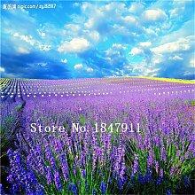 Großer Verkauf 500pcs Lavendel Samen Kraut Samen Garten Balkon Topf Vier Jahreszeiten Blumensamen