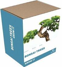 Grow It Grow Your Own Bonsai Bäume