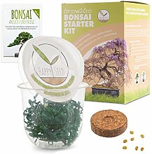 GROW2GO Bonsai Starter Kit Anzuchtset inkl. GRATIS