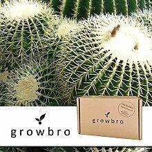 growbro Kaktus Goldkugelkaktus | Anzucht-Set | Geburtstagsgeschenk, Sukkulenten, Geschenke für Männer, Gastgeschenk, Zimmerpflanzen, Kakteen
