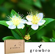 growbro | Myrte | Anzucht-Set | Geburtstagsgeschenk für Frauen, Geschenke für Frauen, Geschenke für Männer, Geburtstagsgeschenk für Männer, Geschenk Hochzeit, Bonsai fähig