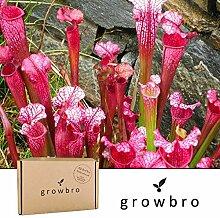 growbro | Schlauchpflanze | Fleischfressende Pflanze | Anzucht-Set | Geburtstagsgeschenk für Frauen, Geschenke für Frauen, Geschenke für Männer, Geburtstagsgeschenk für Männer