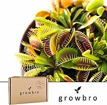 growbro | Venusfliegenfalle | Fleischfressende Pflanze | Anzucht-Set | Geschenk, Gastgeschenke, Geschenk für Frauen, Geschenk für Männer, Geburtstagsgeschenk für Männer