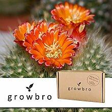 growbro Zwerg - Kaktus | Anzucht-Set | Geburtstagsgeschenk, Geschenke für Frauen, Geschenk für Freundin, Geschenkideen Kakteen