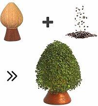 Growing Fiesta Anzuchtset Birnenbaum für