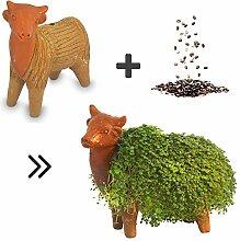 Growing Fiesta Anzuchtset Kuh für Chia-Samen,
