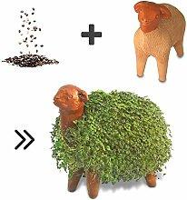 Growing Fiesta Anzuchtset Schaf für Chia-Samen,