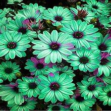 Grün: 20 Sonnenblumensamen Mini Regenbogen
