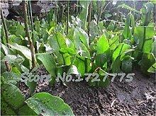 Grün: bonsai blume kaktus samen epiphyllum