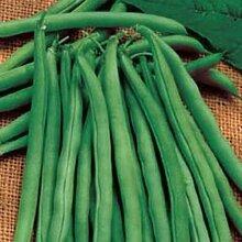 Grüne Bohnen-30 Samen (Snap-Bean) - Bush Blue