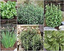 Grüner Garten Shop 6 Kräuter im Set je ein Schnittlauch Petersilie Rosmarin Thymian Salbei Oregano Pflanze je im 9 cm Topf