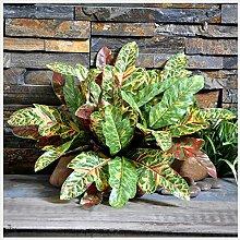 GSYLOL Green Künstliche Farn Blätter Kunststoff