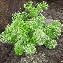 GSYLOL Kunststoff Künstliche Moos Gras Bonsai Pflanzen Wohnkultur Grün Wand Zubehör, weiß